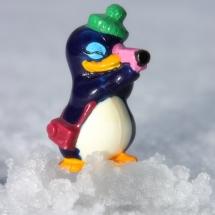 pinguin2